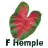 Frieda Hemple Caladiums