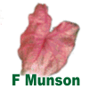 Fannie Munson Caladiums