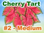 Cherry Tart Caladiums - Medium Bulbs by Count