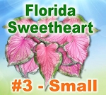 FL Sweetheart Caladiums - Small Bulbs